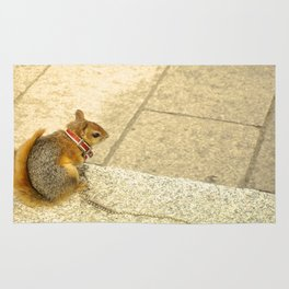 Squirrelly  Sightings Rug