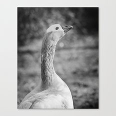 Lucky Henry Canvas Print
