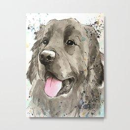 Newfoundland Dog Art Metal Print