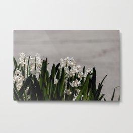 Hyacinth background Metal Print