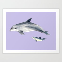 Bottlenose dolphin purple background Art Print
