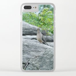 Mourning Dove Clear iPhone Case