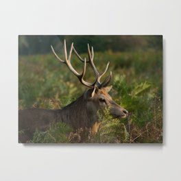 Stag In Morning Sunshine Metal Print