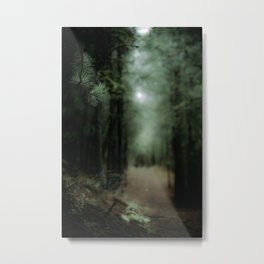 In the forest of Washington state, ponderosa pine trees   Metal Print