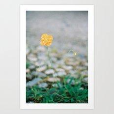 Flower Portrait Yellow Poppy Art Print
