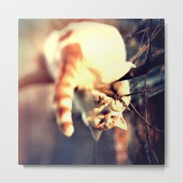 Lomo Cat Metal Print