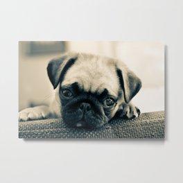 Puppy Pug Metal Print
