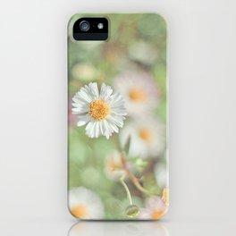 Sunbathing Daisies iPhone Case