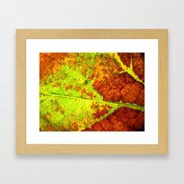 Macro Leaf no 5 Framed Art Print