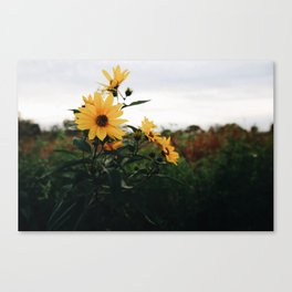 Sunflowers - Fall Canvas Print