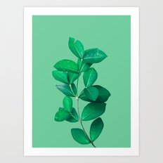 Green Leaves in Green background Art Print
