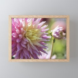 Dreamy Dahlias Framed Mini Art Print