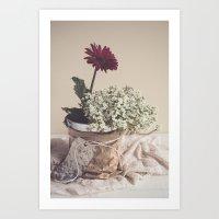 Soft Red Daisy Art Print