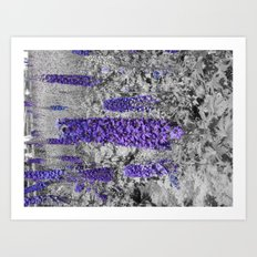 Purple Balboa Art Print