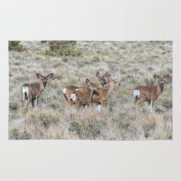 Group of Mule Deer Rug