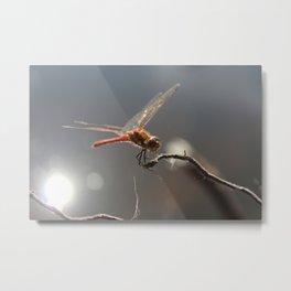 Dragon fly photo Metal Print