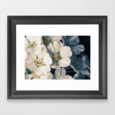 Bridal wreath flowers Framed Art Print