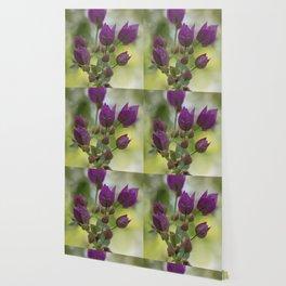 Purple Bougainvillea Wallpaper