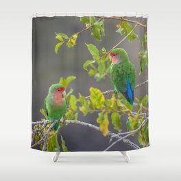 Birds of Namibia 5 Shower Curtain