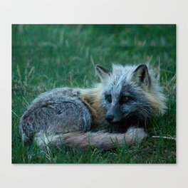 Fox Photography Print Canvas Print
