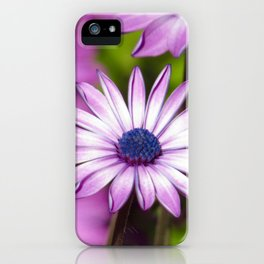 Purple Gerbera Daisies 1 iPhone Case