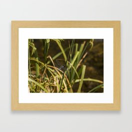 Dragonfly in the marsh Framed Art Print