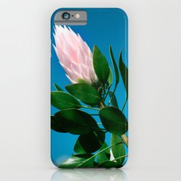 Pink King Protea cynaroides Sugar Bush iPhone Case