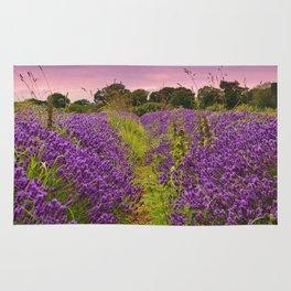 A Norfolk Lavender Field, UK  (Lavandula) Rug