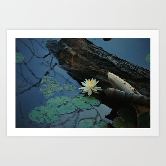 Pond Lily Art Print