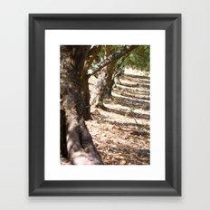 Olive orchard Framed Art Print