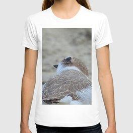 Snowy Plover Scan T-shirt