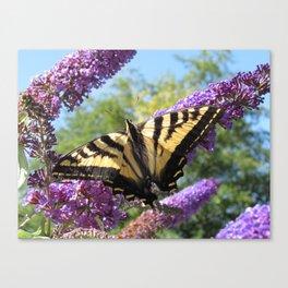 Tiger Swallowtail Canvas Print