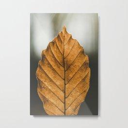 Brown leaf in Atzelsberg Marloffstein Germany Metal Print