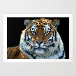 Sumatran Tiger - Panthera Tigris Sumatrae Art Print