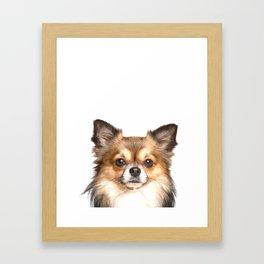Chihuahua Portrait Framed Art Print