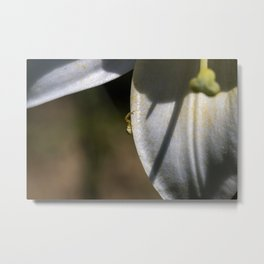 Tiny spider on lily flower Metal Print