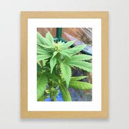 Cannabis and Mantis Framed Art Print