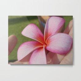 Plumarias in Hawaii Metal Print