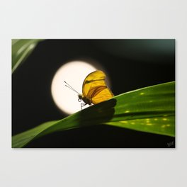 Butterfly and the Moon Canvas Print