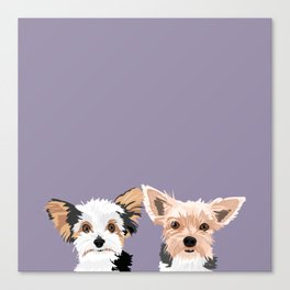 Two Yorkies Canvas Print