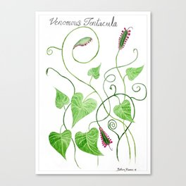Venomous Tentacula Botanical Art Canvas Print