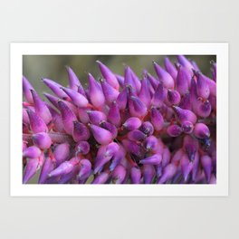 Flower that's Purple Aplenty Art Print