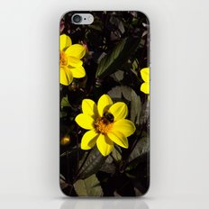 Bee in a Flower iPhone & iPod Skin