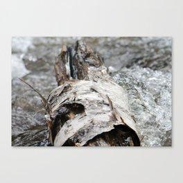 Cedar Log Canvas Print