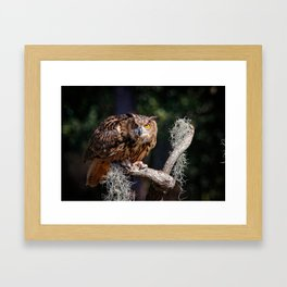 Owl perched on a dead tree Framed Art Print