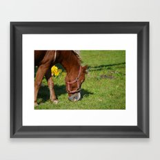 Renaissance Pony - Sorrel Red Framed Art Print