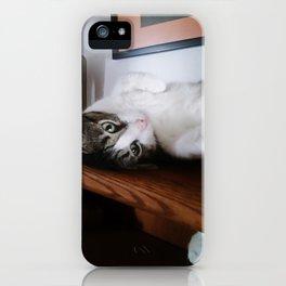 Cat on a Shelf iPhone Case