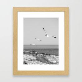 Fou de Bassan #1 Framed Art Print