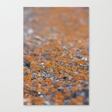 Orange Moss Canvas Print