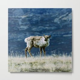 The North | Reindeer Metal Print